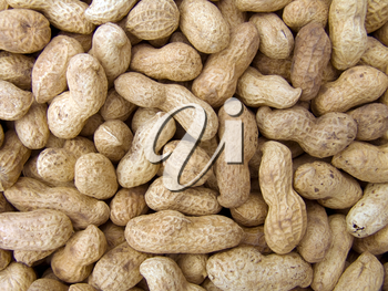 Agricultural background, a pile of beautiful peanut