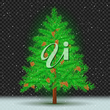Spruce with cones on transparent dark background. Christmas fir tree and pine cone in branches. Green needles plant with shadow. New Year pine fir-tree