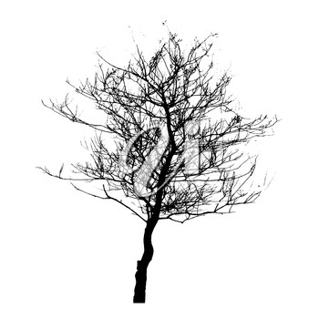 Tree Silhouette Isolated on White Backgorund. Vecrtor Illustration