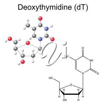 Structural chemical formula and model of deoxythymidine, 2D and 3D illustration, isolated on white background, vector, eps 8