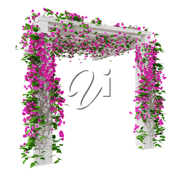 Pink flowers bougainvillea. 3D graphic isolated object on white background