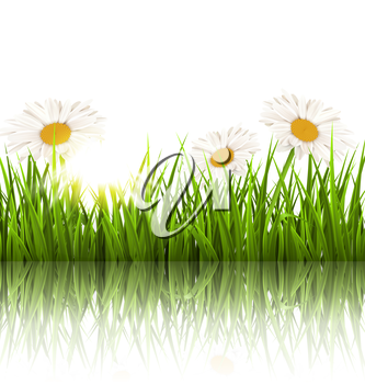 Green grass lawn with white chamomiles and reflection on white. Floral nature flower background