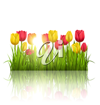 Green grass lawn with yellow and red tulips sunlight and reflection on white. Floral nature flower background