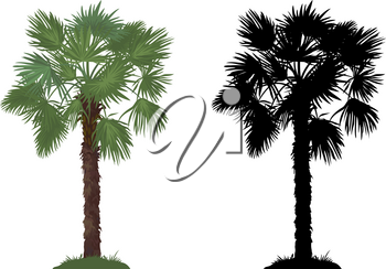 Tropical Palm Tree with Green Leaves and Grass and Black Silhouettes Isolated on White Background. Vector