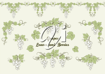 Set of Grape Berries Contours and Green Leaves and Seamless Pattern. Vector