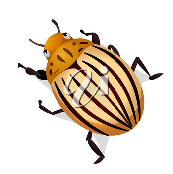Vector illustration of colorado potato beetle isolated on white background