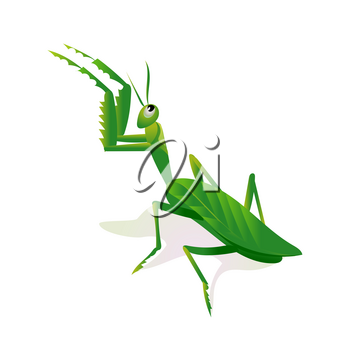 Mantis in an attacking pose, minimalist image on white background