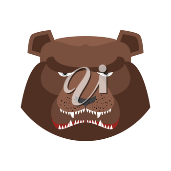 Angry bear in green beret. Aggressive Grizzly head. Wild animal muzzle isolated. Forest predator