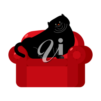 Fat Black cat on red armchair. Home pet on chair