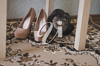 The cat sniffs womens shoes.