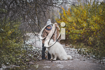 A boy walking his snow-white Samoyed in the autumn alleys.