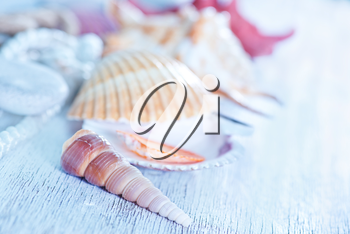 sea shells on the wooden boards, summer background