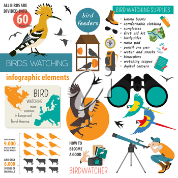 Bird watching infographic template. Vector illustration