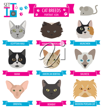 Cat breeds icon set flat style. Vector illustration