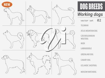 Working, watching dog breeds,  set icon isolated on white .Outline, linear version.  Vector illustration