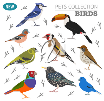 Pet birds collection,  breeds icon set flat style isolated on white.  Create own infographic about pets. Vector illustration