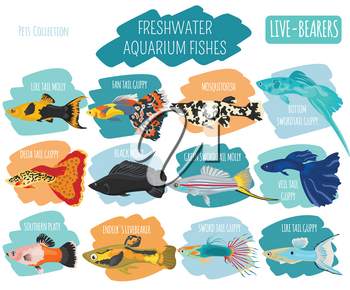 Freshwater fishes breeds icon set flat style isolated on white. Live-bearing aquarium fish. Create own infographic about pets. Vector illustration