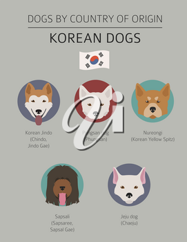 Dogs by country of origin. Korean dog breeds. Infographic template. Vector illustration