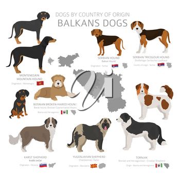 Dogs by country of origin. Balkans dog breeds. Shepherds, hunting, herding, toy, working and service dogs  set.  Vector illustration