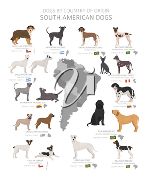Dogs by country of origin. South American dog breeds. Shepherds, hunting, herding, toy, working and service dogs  set.  Vector illustration