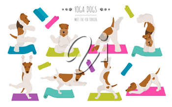 Yoga dogs poses and exercises poster design. Smooth fox terrier and wire fox terrier clipart. Vector illustration