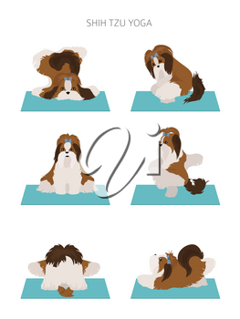 Yoga dogs poses and exercises poster design. Shih tzu clipart. Vector illustration