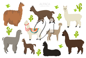 Camelids family collection. Alpaca graphic design. Vector illustration
