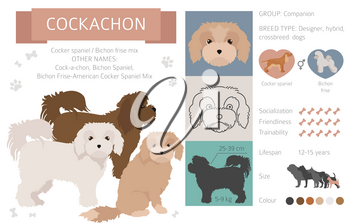Designer dogs, crossbreed, hybrid mix pooches collection isolated on white. Cockachon flat style clipart infographic. Vector illustration