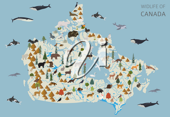 Flat design of Canada wildlife. Animals, birds and plants constructor elements isolated on white set. Build your own geography infographics collection. Vector illustration