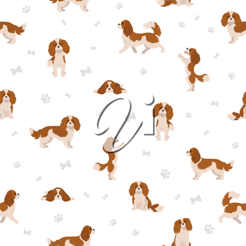 Cavalier King Charles spaniel seamless pattern.  Different poses, coat colors set.  Vector illustration