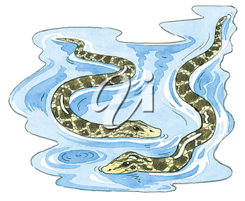 Royalty Free Clipart Image of Water Snakes