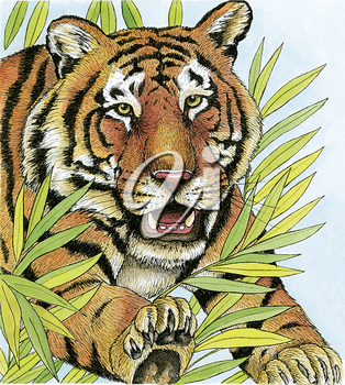 Royalty Free Clipart Image of a Pouncing Tiger