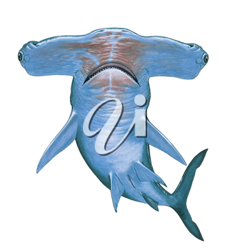Royalty Free Clipart Image of a Hammerhead Shark