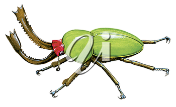 Royalty Free Clipart Image of a Green Stag Beetle