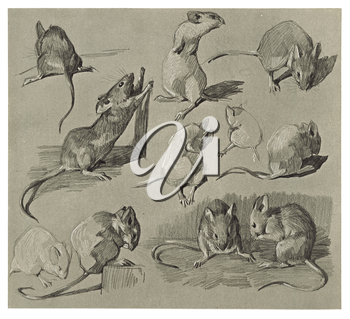 Royalty Free Clipart Image of Mice