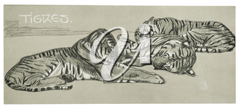 Royalty Free Clipart Image of Sleeping Tigers