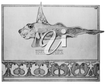 Royalty Free Clipart Image of a Ratfish
