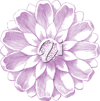 Royalty Free Clipart Image of a Purple Flower
