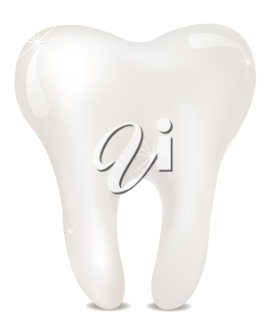 Tooth on a white background. isolated