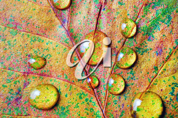 Bright autumn leaf with water drops. Macro photography. Flat lay.