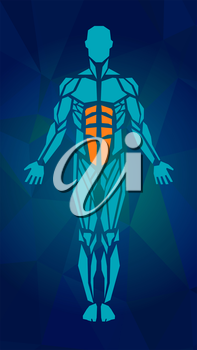 Polygonal anatomy of male muscular system, exercise and muscle guide. Human muscle vector art, front view. Vector illustration