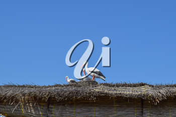 Figures storks on the thatched roof. The scenery of the animal figures.