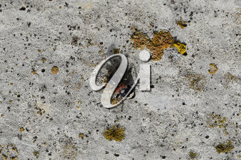 Tri-color beetle on old concrete. An insect of the family of beetles.
