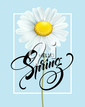 Calligraphic inscription Hello Spring with spring flower - blooming white daisy. Vector illustration EPS10