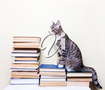 Cat sitting on the books, concept studies, education