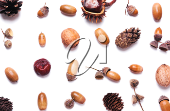 Composition of chestnut, pine cones, acorns on a white background. creative concept of autumn. Pastel colors. Top view, flat