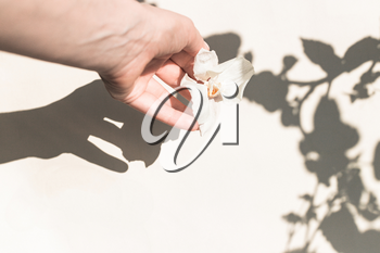 A female hand with a dry white flower and a shadow from the leaves. Floral minimal design. Styling, trend for bloggers
