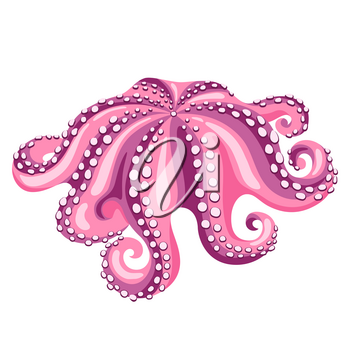 Octopus. Isolated illustration of seafood on white background.
