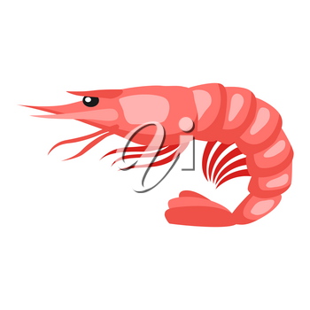 Cooked tiger shrimp. Isolated illustration of seafood on white background.