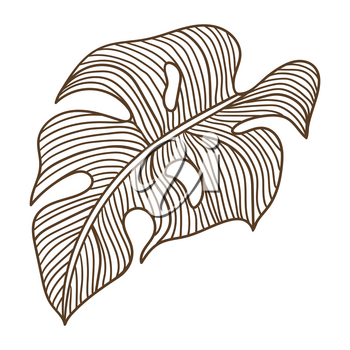 Illustration of stylized monstera palm leaf. Decorative image of tropical foliage and plant. Linear texture.